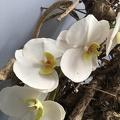 Atelier fleurs en sucre - Orchidées
