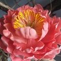 Atelier fleurs en sucre - Pivoine
