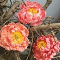 Atelier fleurs sur fil - Pivoines