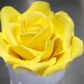 Atelier fleurs sur fil - Rose
