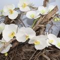 Atelier fleurs sur fil - Orchidées
