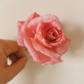 Rose en wafer paper