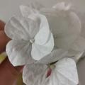 Fleurs en Wafer Paper