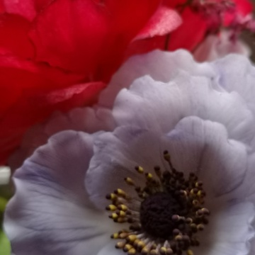 Wafer paper peony and sugar anemone